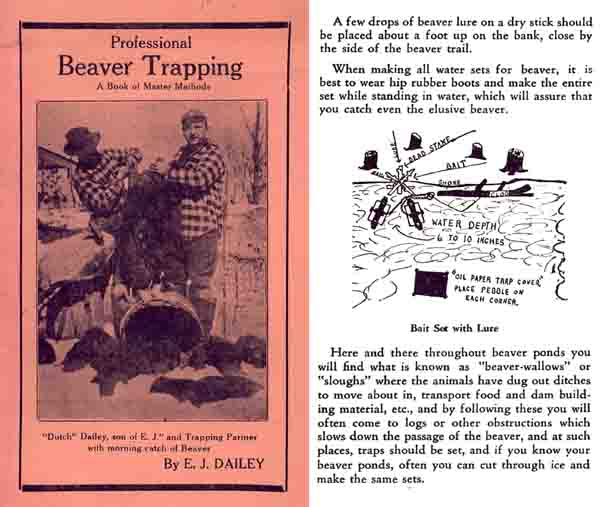 Professional Beaver Trapping c1940