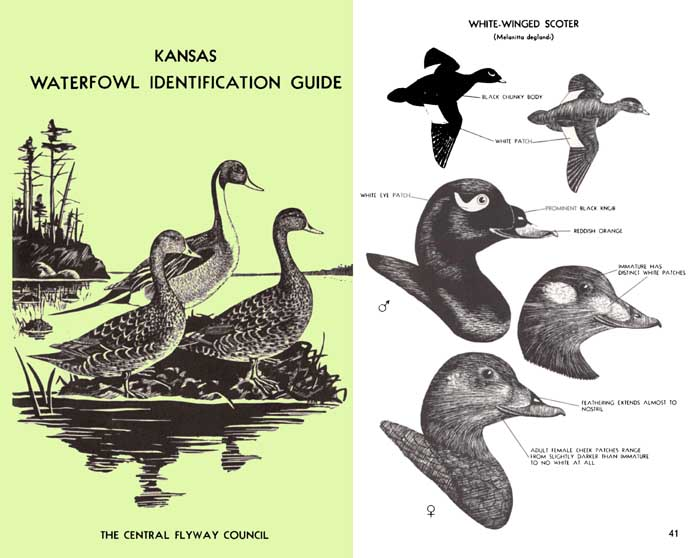 Waterfowl Identification Guide 1970- The Central Flyway Council