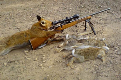 Fox Shooting Rifle Image